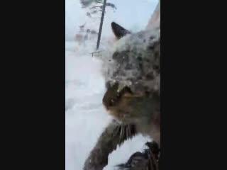 Школьник спас примерзшего кота 2ch webm