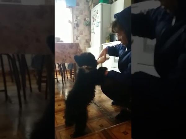 Медвежонок сам пришёл к дому в Алтайском крае