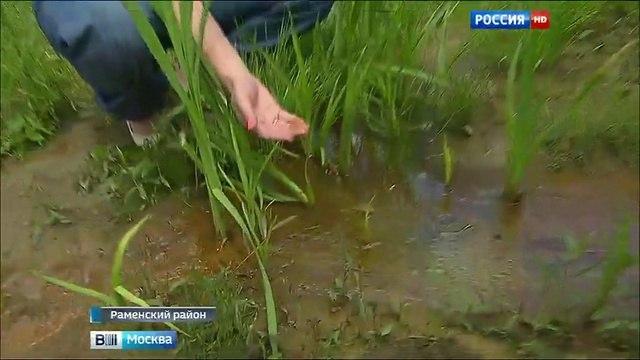 Вести-Москва • Вести-Москва. Эфир от 24.07.2015 (11:30)