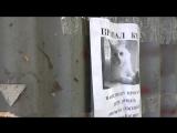 Оптическая иллюзия с пропавшим российским котом