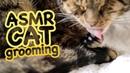 ASMR Cat Grooming 37