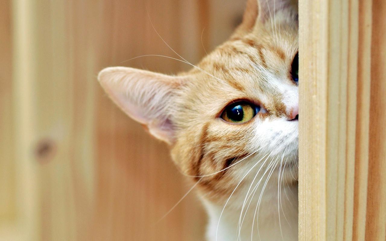 """В Асино должники пытались спрятаться в подполье в коробке из-под телевизора, но их """"сдал"""" кот"""