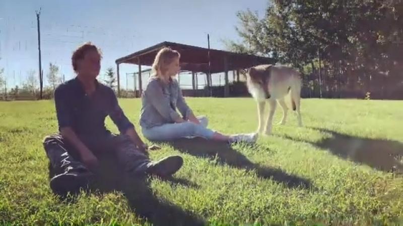 Лили проводит время с волками