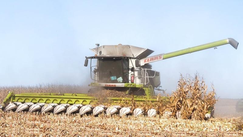 🇫🇷 XXL CORN Harvest Moisson Maïs in FRANCE ! 16 ROWS Lexion 770