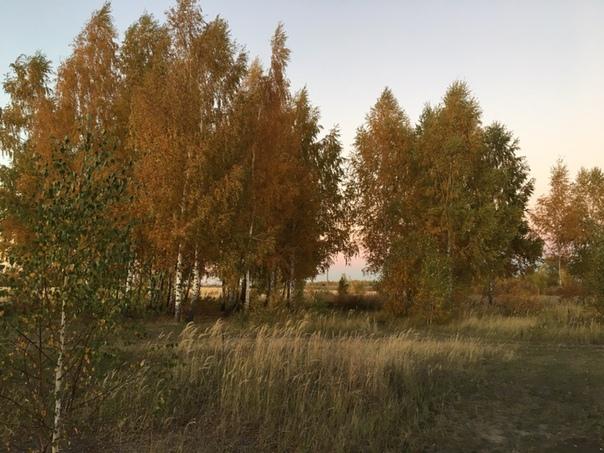Фото №456239182 со страницы Сергея Набатчикова