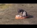 Als dieser hund gerettet wurde ist was unmögliches passiert