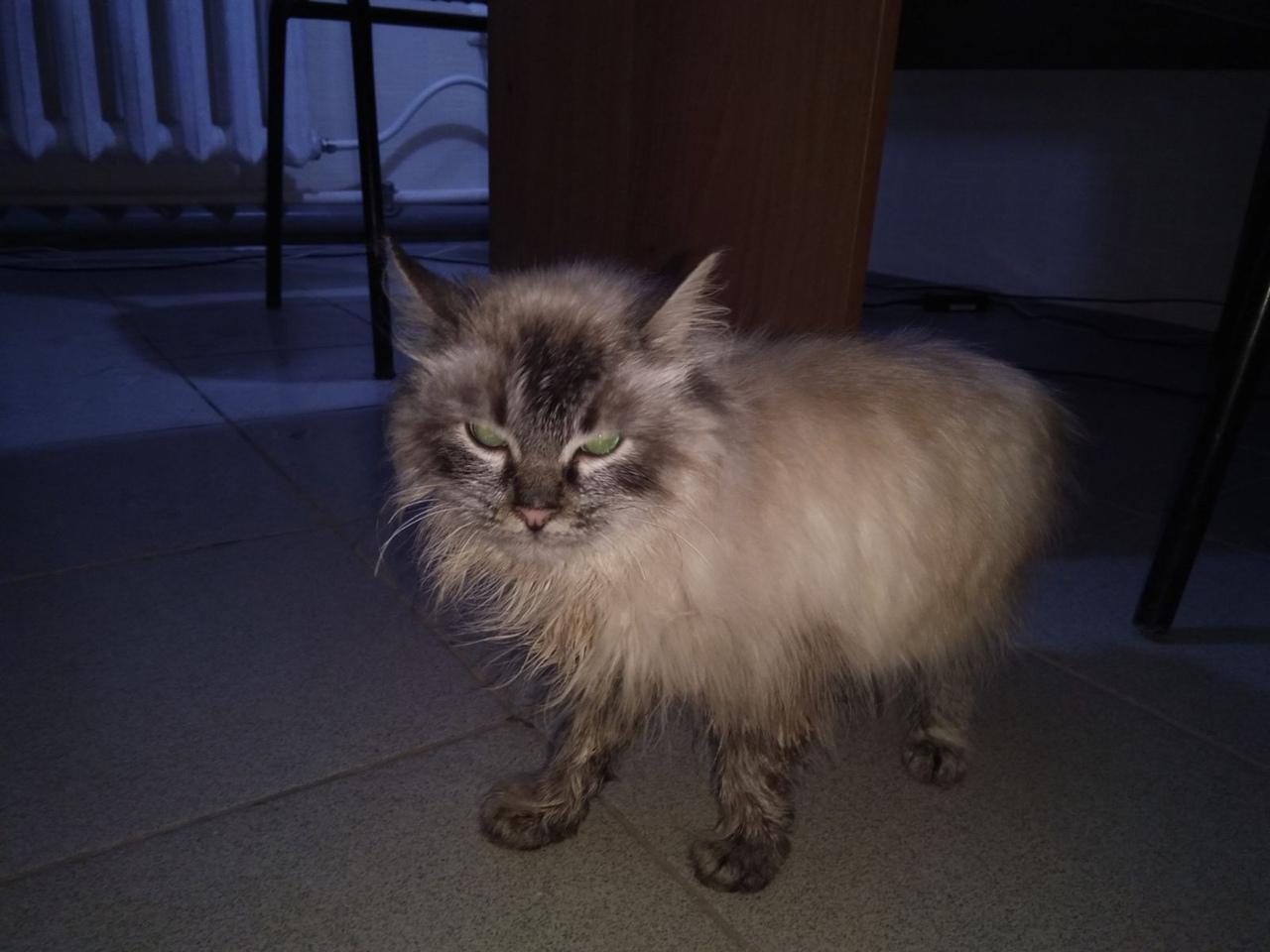 #нужна_финансовая_помощь@vmestepnz_animals #Тоша_ID132 НУЖН