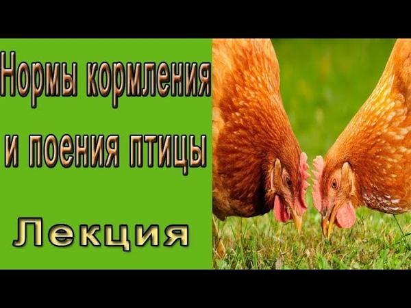 Нормы кормления и поения птицы