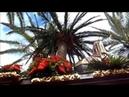 Pollinica ALHAURIN de la TORRE 2018 las mejores marchas de AM Remedios Domingo de Ramos 25 03