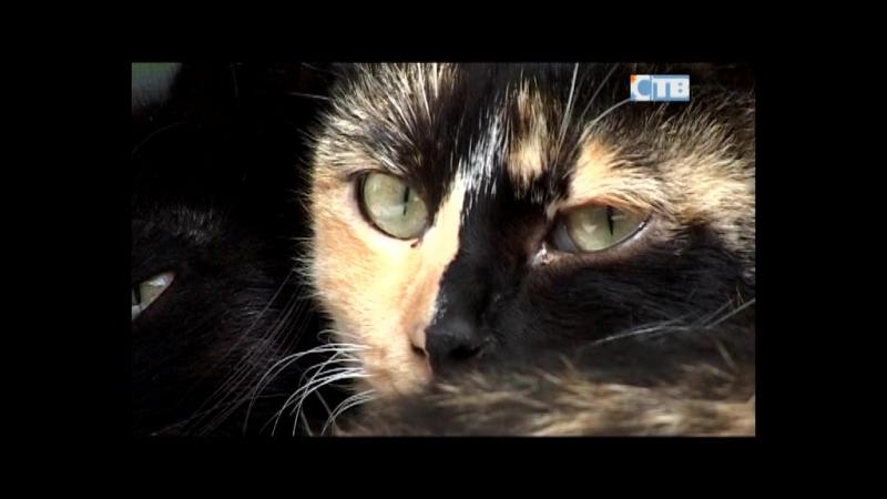 05.06.2018 УК замуровала подвалы вместе с бездомными кошками