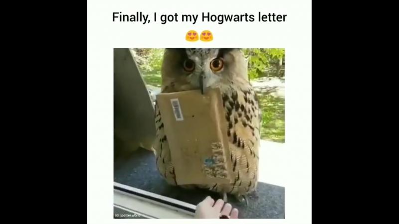 Совушка с письмом