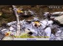 قناة القران الكريم بث مباشر Коран Quran Live Stream