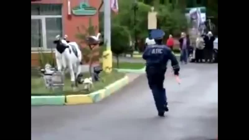 Мент танцует (я татарин)