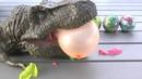 Dinosaur eggs open and see what toys inside Открываем Яйца Динозавров с Игрушками для детей