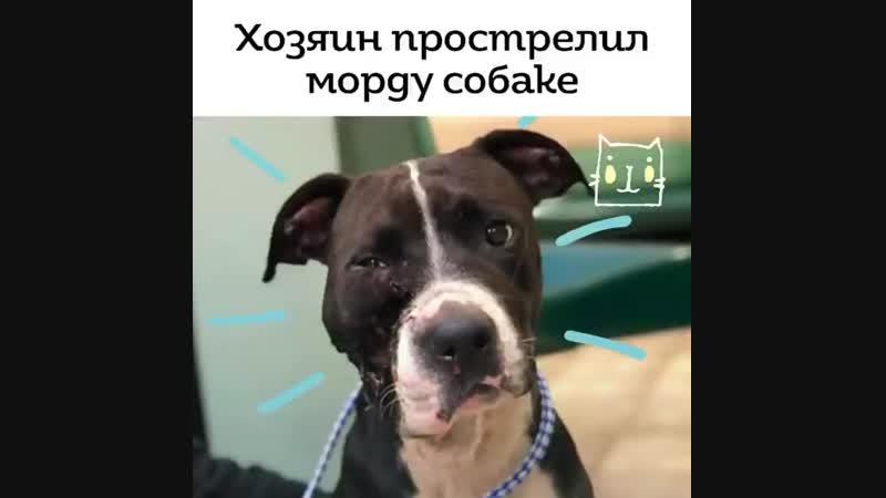 Kot_media_video_1548019015620.mp4