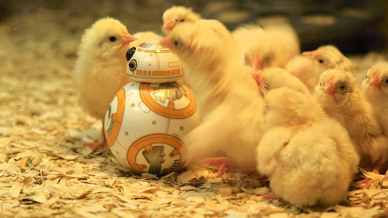 робот курица