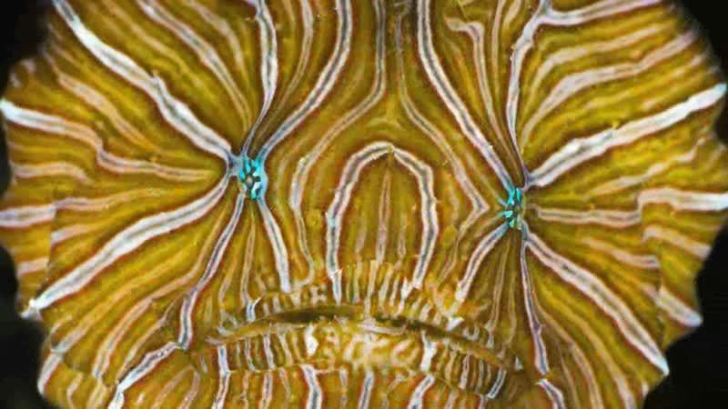 А знаете ли вы... Выпуск 14. Психоделическая рыба-лягушка