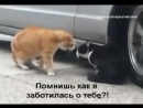 Кошка ругает кота за измену