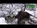 Подборка охот на лося в Норвегии часть 1