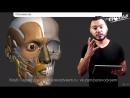 Анатомия лица в рисунке: от анатомии до рендеринга