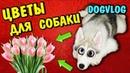 8 МАРТА У СОБАКИ И КОШКИ! DOGVLOG. Мультики про животных. Говорящая собака