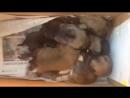 10 щенков остались сиротками