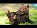 Медведя покормили и напугали