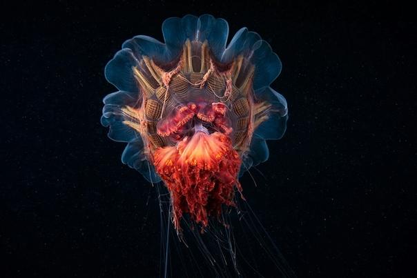 Реальные инопланетяне Александра Семёнова Морской биолог Александр Семёнов начальник водолазной группы Беломорской биологической станции МГУ и подводный фотограф. Он принимает участие в