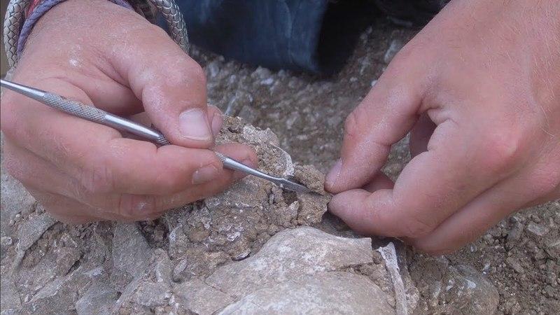Viking Dead ' The Secret Viking Grave of Ridgeway Hill | Могилы викингов ' Тайна захоронения на Риджуэй Хилл