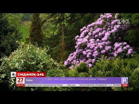 Мій путівник. Грузія - батумский ботанічний сад, Вежа Алфавіту та шоу фонтанів