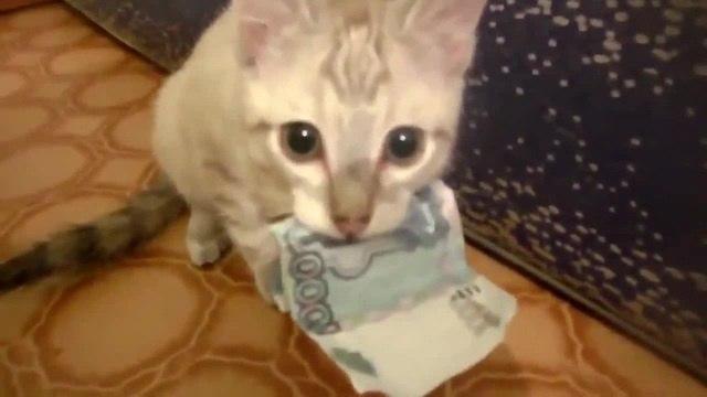 Do not take my money human