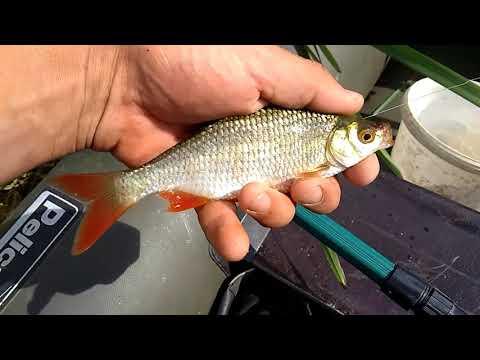 В этой реке живут огромные рыбины, но как их поймать!!