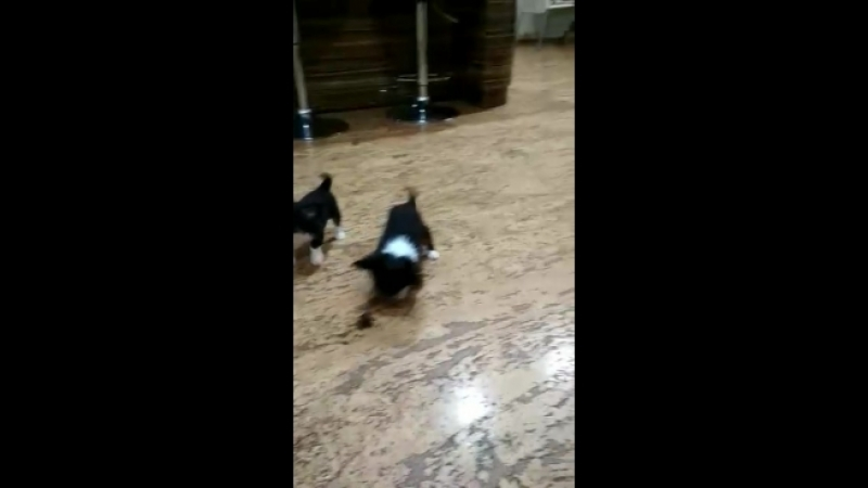 Video 0ad9fea59f4698257ff948695590935f