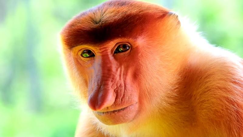 Животные которые в скором времени могут исчезнуть с лица Земли. ТОП. 2019