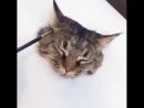 Как я кота в 3D рисовал .😄