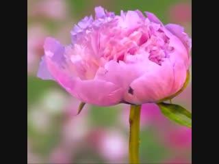 Можно смотреть бесконечно - Школа цветоводства и сад
