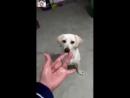 Реакция животных на недвусмысленный жест