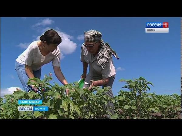 Вести-Коми 17.07.2018