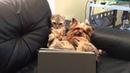 ПОПРОБУЙ НЕ ЗАСМЕЯТЬСЯ - Смешные коты и другие Животные до слез, Cute Dogs and Cats 102