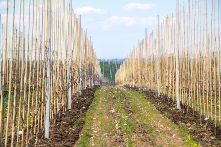 В Урупском районе создаются кооперативы для выращивания мини-садов