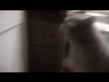 Кот говорит открой дверь