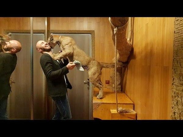 Cougar Messi Crime and punishment