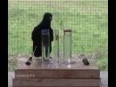 Ворона-умная птица