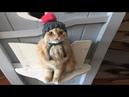 СМЕШНЫЕ КОШКИ Смешные котята – Видео для детей Маленькие Смешные коты 2018