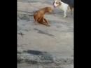 Cachorro descascando a banana