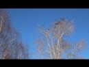 Вербное воскресенье Кыддзявидзь 01 04 18