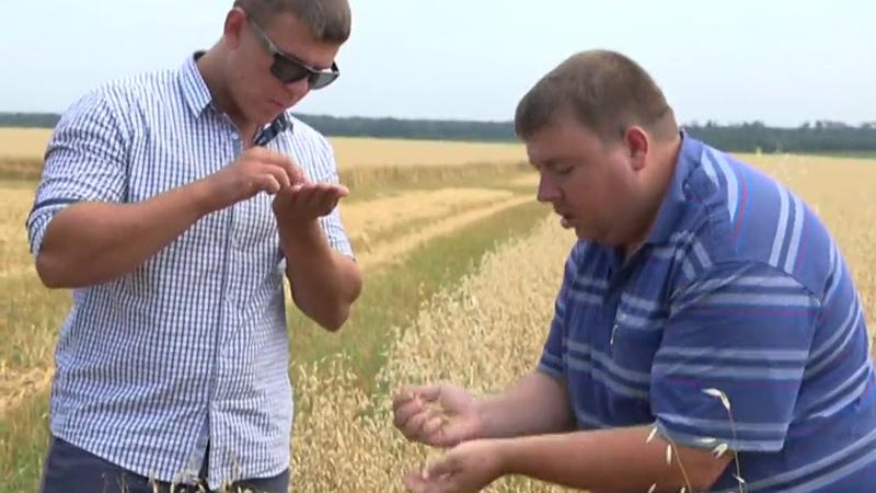 Земледельцы района завершают уборку зерновых культур.