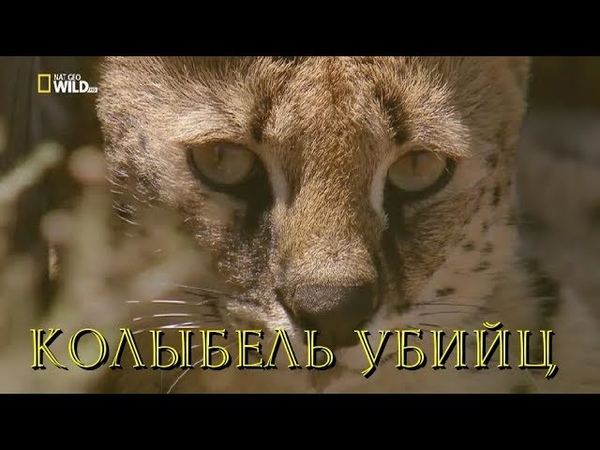 Nat Geo Wild: Южная Африка: Колыбель убийц (1080р)