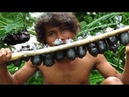 Primitive Technology - Find dung beetle on tree - grilled dung beetle Insect eating delicious