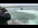 Как береговая охрана ловит браконьеров